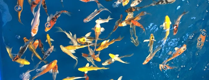San Diego Tropical Fish Stores