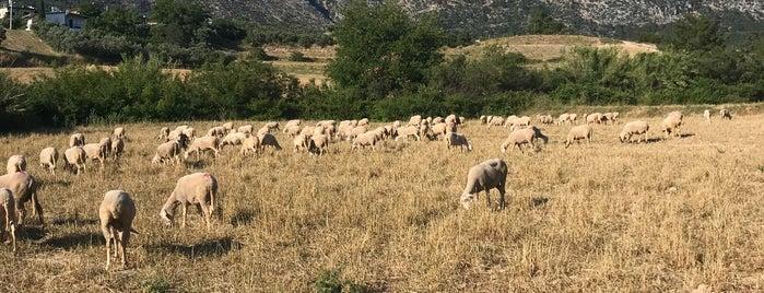 Saraçlı Köyü is one of Locais curtidos por Yılmaz.