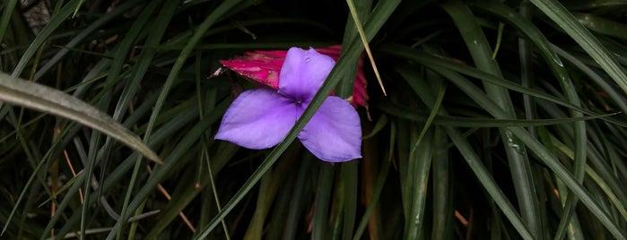 Sunken Garden is one of Posti che sono piaciuti a Leilani.