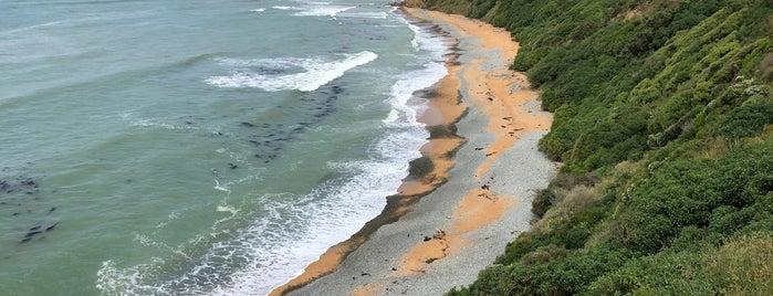 Bushy Beach is one of Nuova Zelanda.