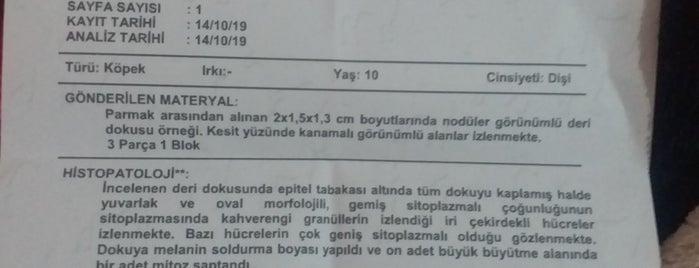 Zeytinburnu Veteriner Kliniği is one of Lieux qui ont plu à Ayşe.