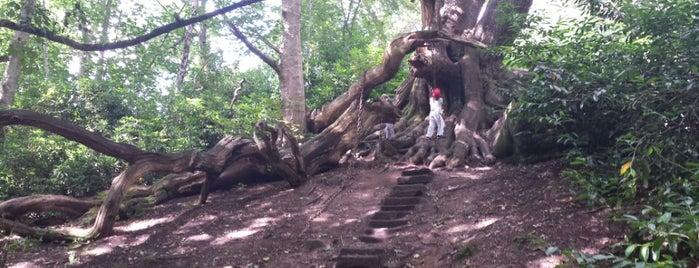 Chained Oak is one of Tom : понравившиеся места.