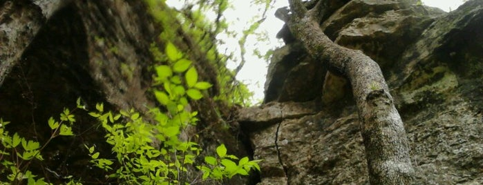 Redbud Valley Nature Preserve is one of Tulsa Time.