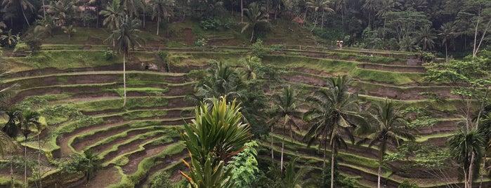 Tegalalang Ricefield Ubud is one of Bali Honeymoon.