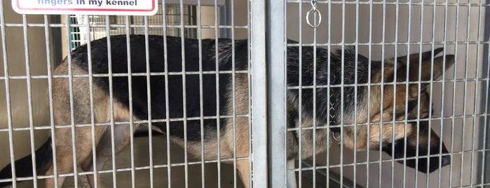 Mission Viejo Animal Services/Shelter is one of สถานที่ที่บันทึกไว้ของ C.