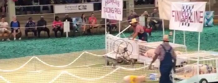 Hedricks Racing Pigs is one of Locais curtidos por Chris.