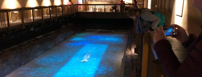 Caerleon Roman Fortress Baths is one of Locais curtidos por Carl.