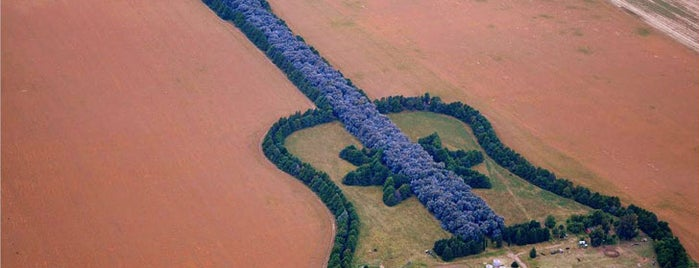 Guitar Shaped Forest is one of Zvuk.