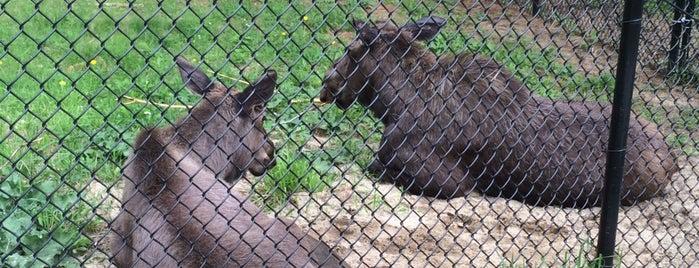 Maine Wildlife Park is one of Dana'nın Beğendiği Mekanlar.