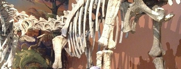 New Mexico Museum of Natural History & Science is one of Best places to see dinosaurs.