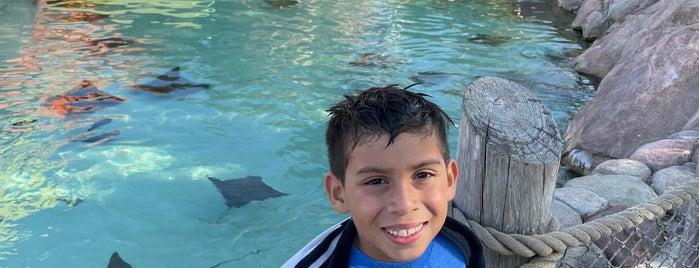 Aquatica San Antonio is one of Lieux qui ont plu à Ron.