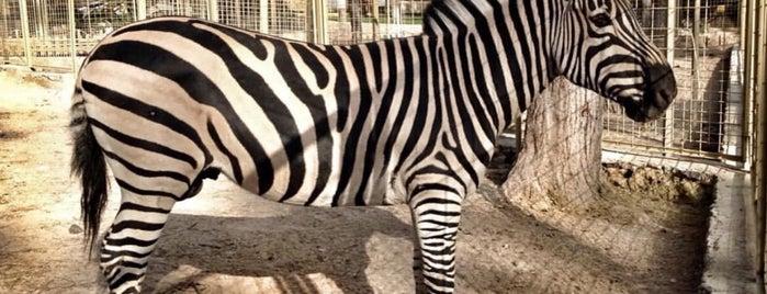 Antalya Doğal Yaşam Parkı ve Hayvanat Bahçesi is one of Lugares guardados de Özgür.