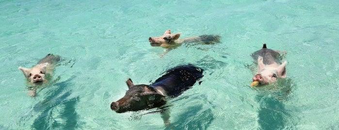 Sandals Emerald Bay Quiet Pool is one of Lieux qui ont plu à Jules.