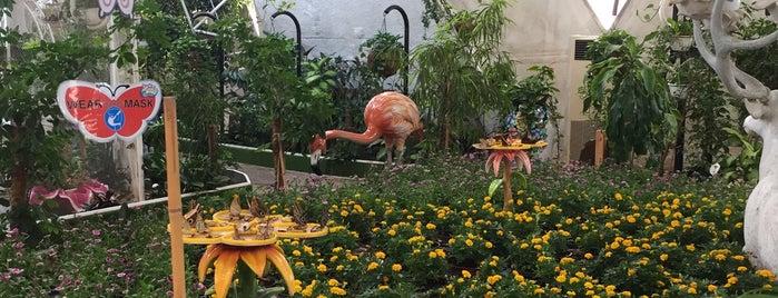 Dubai Butterfly Garden حديقة دبي للفراشات is one of Mama in Dubai 🦁.