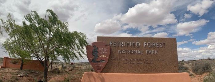Petrified Forest National Park Visitor Center is one of Locais curtidos por David.