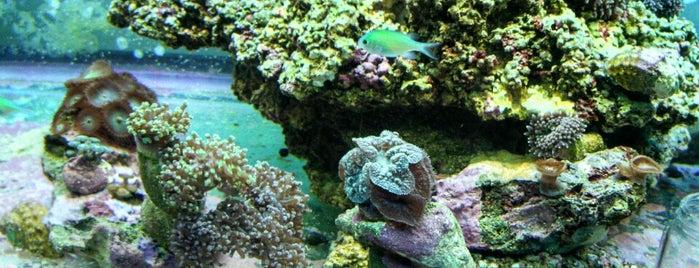 The Fish Room is one of Posti che sono piaciuti a Kimberly.
