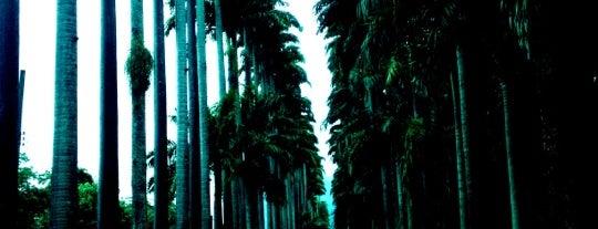 Instituto de Pesquisas Jardim Botânico do Rio de Janeiro is one of RJ a conhecer.