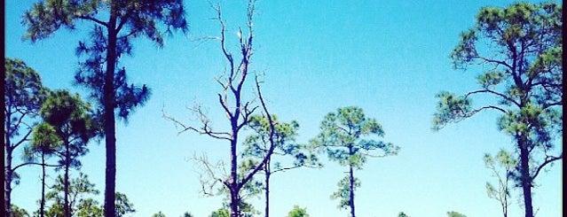 Pine Island Flatwoods Preserve is one of Tempat yang Disukai Daniel.