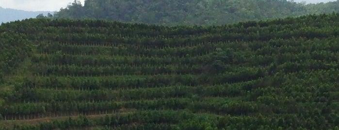 Gaharu Tea Valley Gopeng is one of Lugares favoritos de mzyenh.
