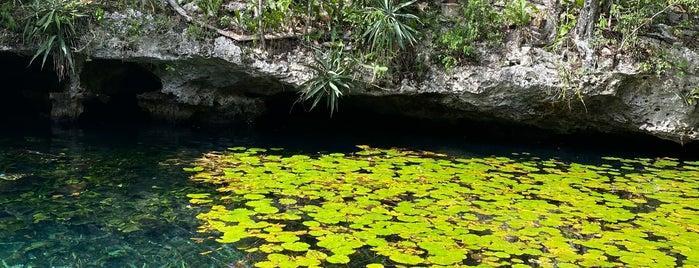 Cenote Nicte-Ha is one of Tulum.