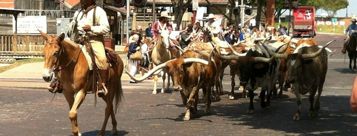 Stockyard Cattle Drive is one of Texas.