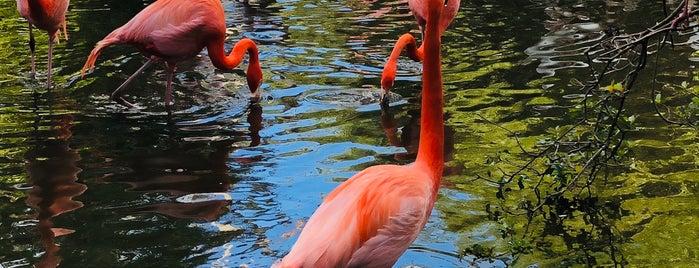 Flamingo Gardens Aviary is one of North Broward.