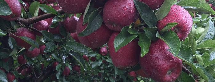 Pennings Orchard & Farm Market is one of Excellent Farms for Apple Picking.