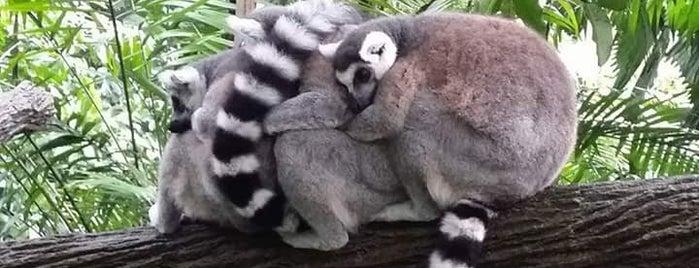 Singapore Zoo is one of Locais curtidos por Sholihin.
