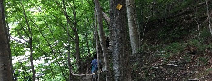 Parc d'environnement naturel de Sutton is one of สถานที่ที่ Mikael ถูกใจ.