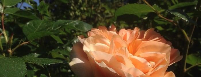 Royal Rosarian Garden is one of Locais curtidos por Julie.