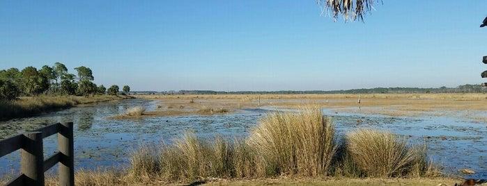 St Marks Wildlife Reserve is one of Jenn'in Beğendiği Mekanlar.