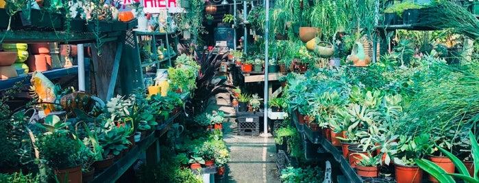 Echo Garden & Nursery is one of LA Furniture.