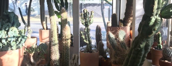 Cactus Store is one of LA.
