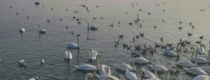 Дунав | Dunav is one of Tempat yang Disukai Karmin.