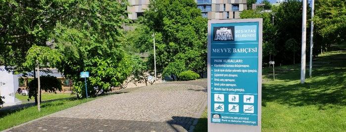 Beşiktaş Belediyesi Ortaköy Meyve Bahçesi is one of Parklar.