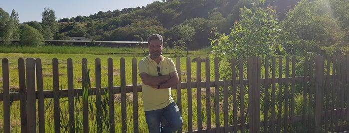 Yüzen Ada is one of Gezi & Seyahat.