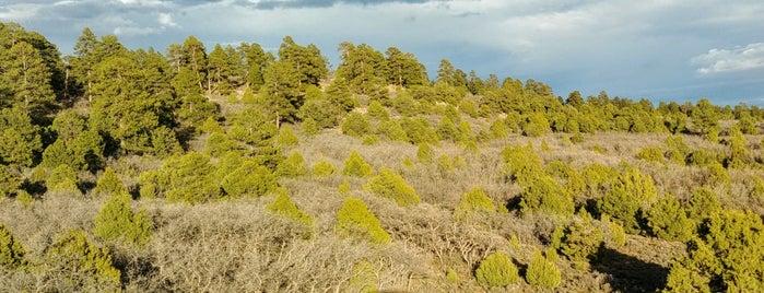 Manti-La Sal National Forest is one of Utah + Vegas 2018.