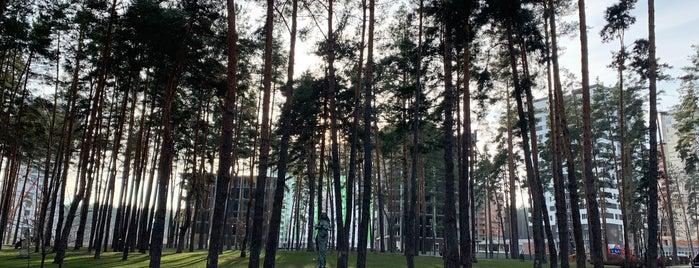 Центральний Ірпінський Міський Парк is one of สถานที่ที่ Igor ถูกใจ.