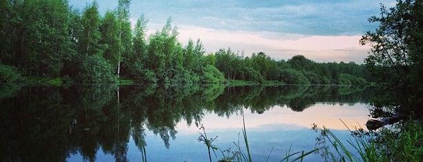 Юнтоловский заказник is one of Tempat yang Disukai Valeria.