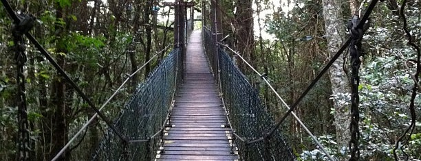 O'Reilly's Tree Top Walk is one of Gold Coast.