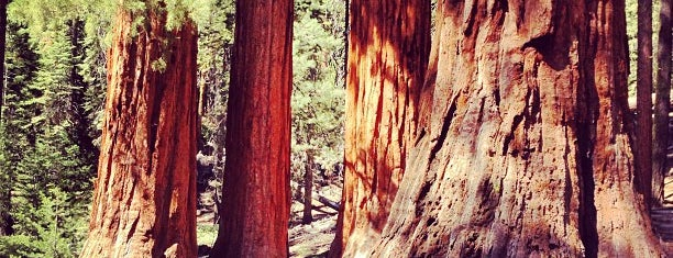 Mariposa Grove of Giant Sequoias is one of Yosemite Valley.