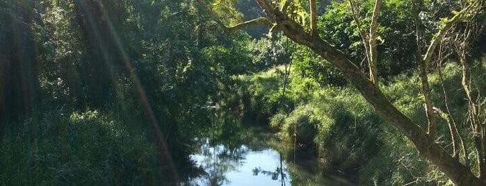 Kipu Falls is one of Lieux qui ont plu à Bob.