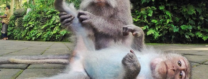 Sacred Monkey Forest Sanctuary is one of Yondering's Liked Places.