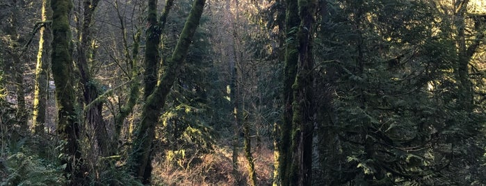 Forest Park - Wildwood Trailhead is one of Portland.