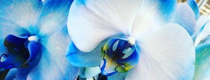 Garden&Koala is one of Emineさんのお気に入りスポット.
