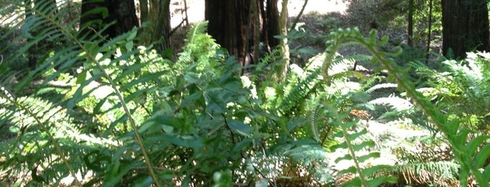 Armstrong Redwoods State Natural Reserve is one of Sonoma County.