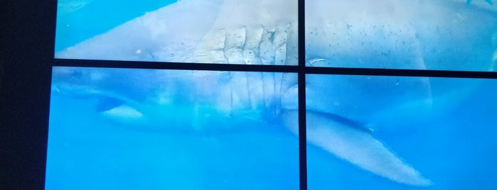 Via Aquarium is one of Orte, die Nicholas gefallen.