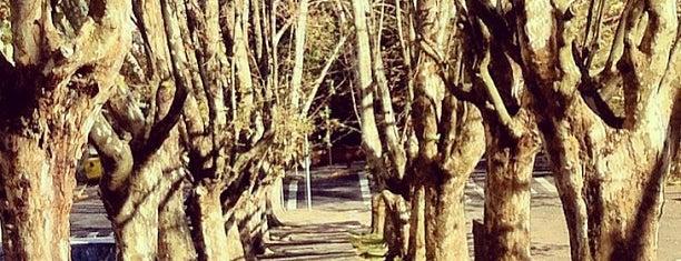 Parque Getúlio Vargas (Parque dos Macaquinhos) is one of O melhor de Caxias.