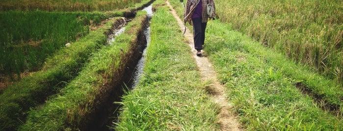 Rice Terraces Ubud Kaja is one of Ubud.
