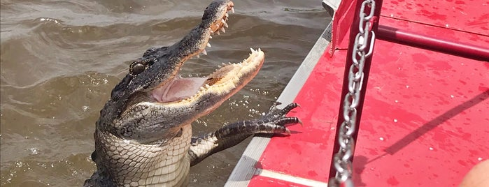 New Orleans Airboat Tours is one of Friends' Favs.